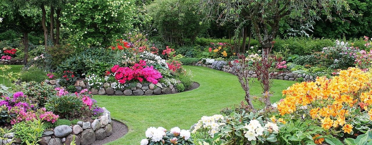 groenblijvende planten tuin
