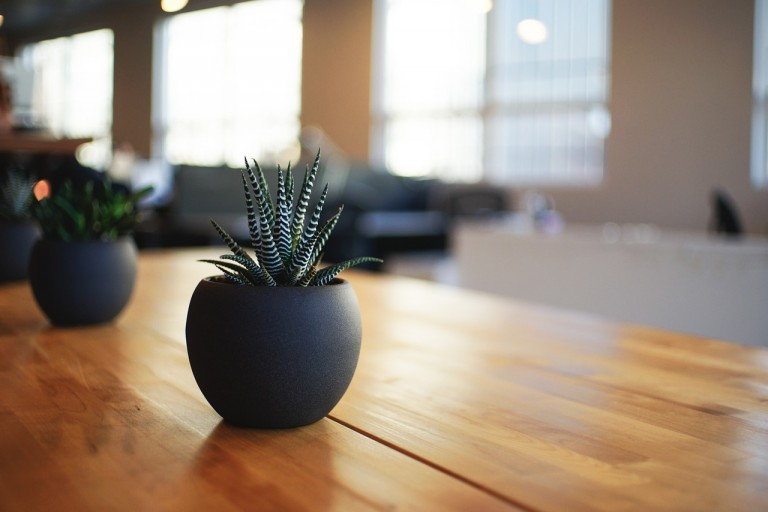 Maak je woonkamer groener met leuke kamerplanten
