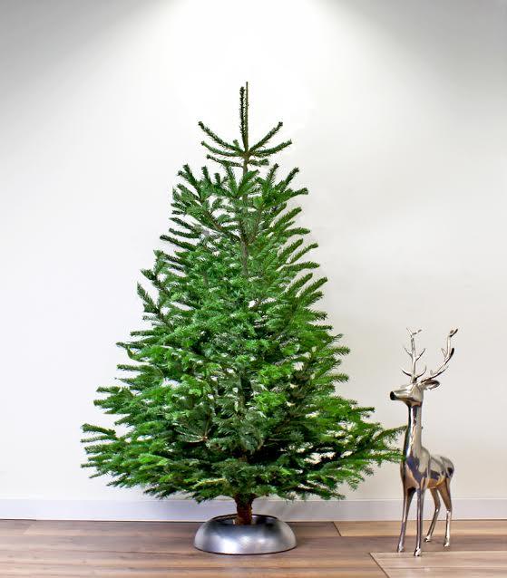 Nederland ontdekt massaal voorgeboorde kerstboom
