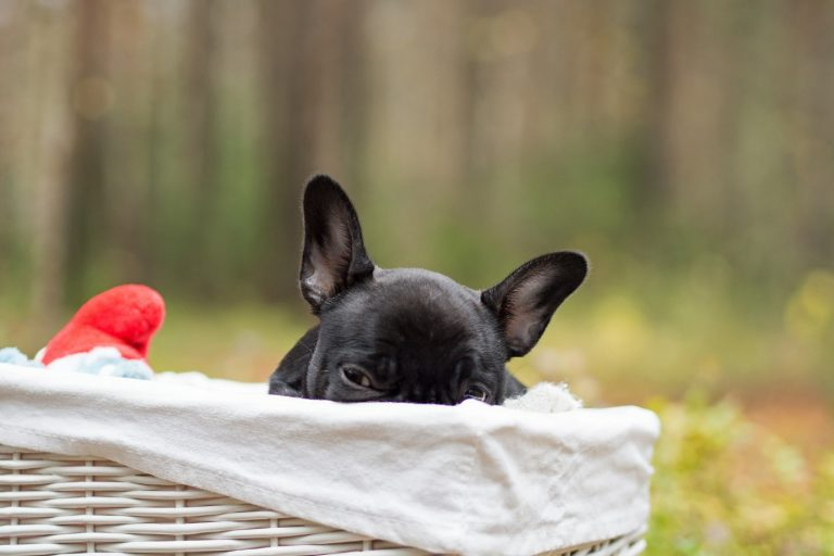 Een hondenkussen dat past bij het interieur