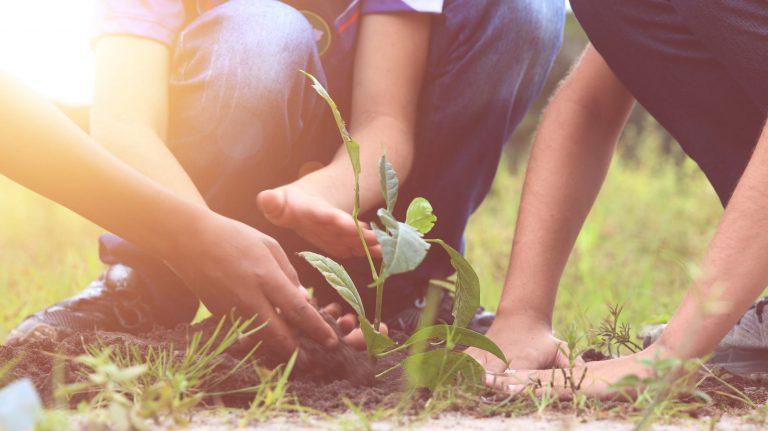 Trends 2019 op het gebied van duurzaamheid