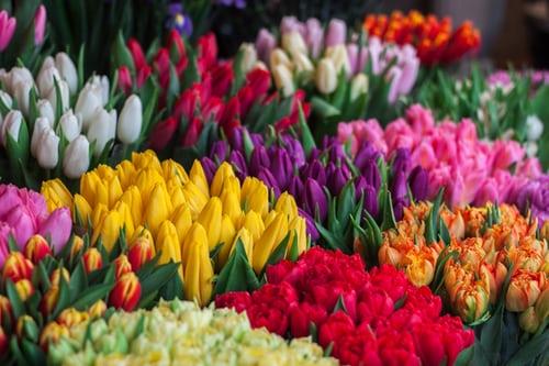 Kies ervoor om bloemen te sturen