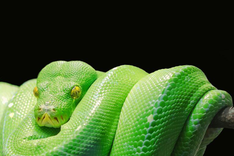 Voorkom het stuk rijden van slangen met een slangbrug
