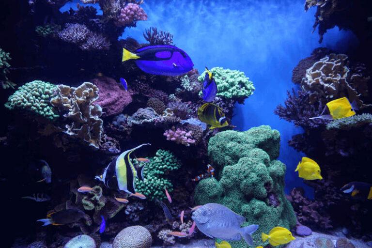 Led aquariumverlichting biedt vele voordelen